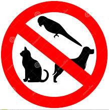 Geen diere